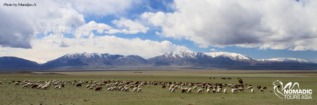 Explore wilderness of Mongolia